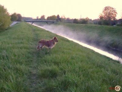 elysium - Tierverhalten Verstehen - Lernen sie den Hund verstehen