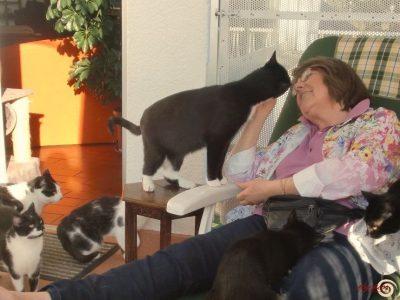 elysium - Tierverhalten Verstehen - Tierkommunikation und Tieraufstellung