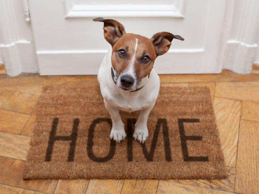 Verlassensein-Angst beim Hund – oder doch Kontroll-Verlust-Randale?