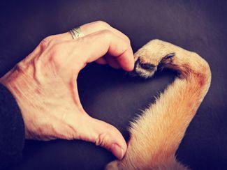 elysium - Tierverhalten verstehen - Sterbebegleitung - Trauerarbeit