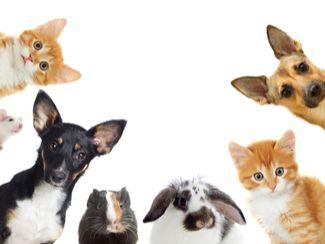 elysium - Tierverhalten verstehen -